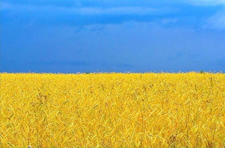 Flag of Ukraine - sky and field